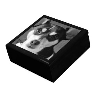 Black and White Rat Terrier Large Square Gift Box