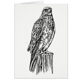 Black and White Regal Hawk Card