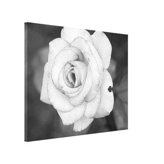 Black and white rose gallery wrap canvas