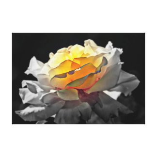 Black and white Rose glowing center artwork canvas Stretched Canvas Print