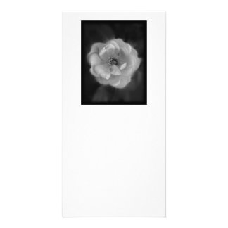 Black and White Rose Photo Greeting Card