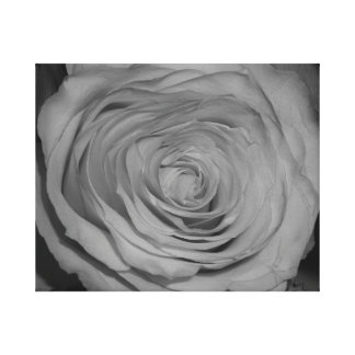 Black and White Rose Photograph Gallery Wrapped Canvas