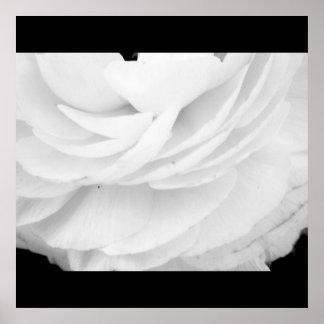 Black and white rose poster