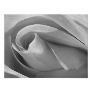Black and White Rose Poster Print Poster