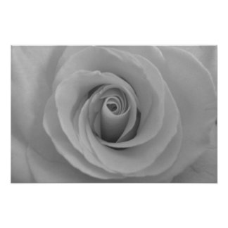 Black and White Rose Print