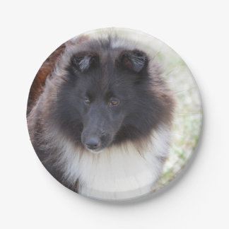 Black and White Sheltie 7 Inch Paper Plate