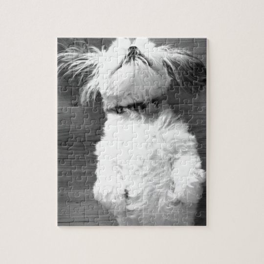 Black and White Shih-Tzu Puppy Jigsaw Puzzle