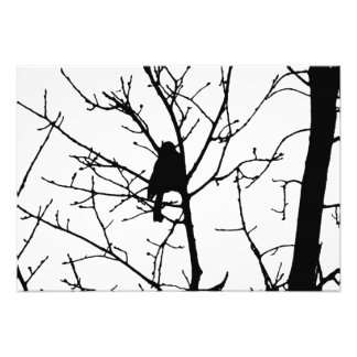Black and White Silhouette of chickadee in a tree Photograph