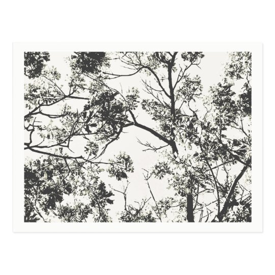 Black and White Silhouette of Tree Postcard