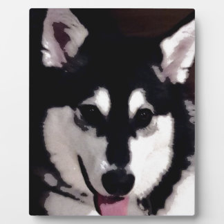 Black and white smiling Alaskan Malamute Photo Plaques