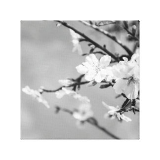 Black and White Spring Cherry trees Canvas Print