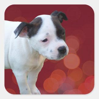 Black And White staffordshire Bull Terrier Puppy, Square Sticker