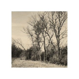 Black and White Stand of Trees Wood Print