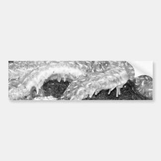 Black and White Starfish Bumper Sticker