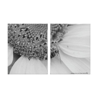 Black and white sunflower and bee gallery wrapped canvas