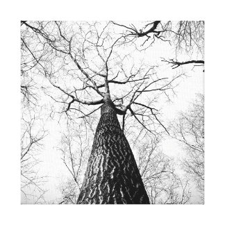 Black and White Tall Trees Forest Canvas Print