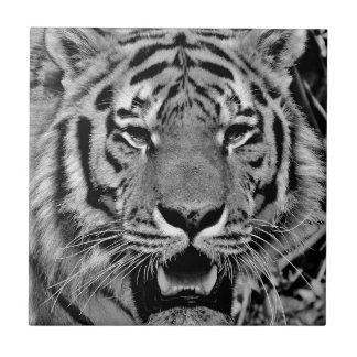 Black and White Tiger Face Tile