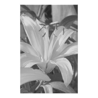 Black and White Tiger Lily Stationery