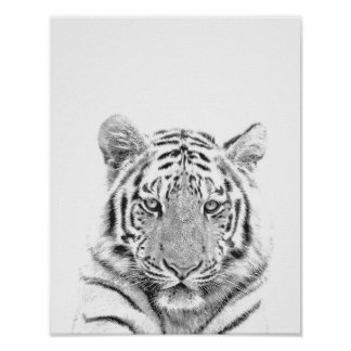 Black and White Tiger Portrait Poster