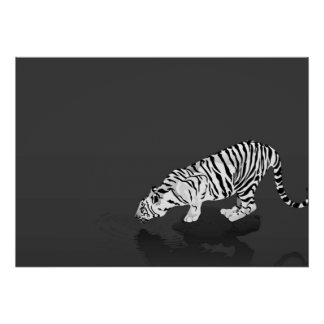 Black and White Tiger Poster