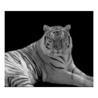 Black and white Tiger Print