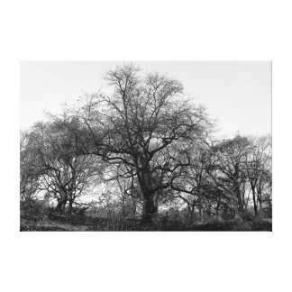 Black and White Tree Landscape Stretched Canvas Print