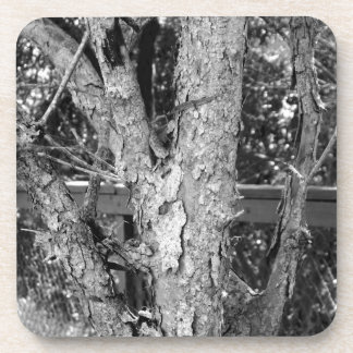 Black and White Tree Nature Photo Coaster
