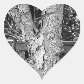 Black and White Tree Nature Photo Heart Sticker