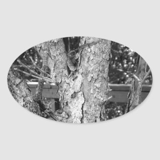 Black and White Tree Nature Photo Oval Sticker