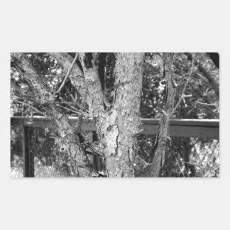 Black and White Tree Nature Photo Rectangular Sticker