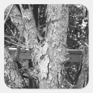 Black and White Tree Nature Photo Square Sticker