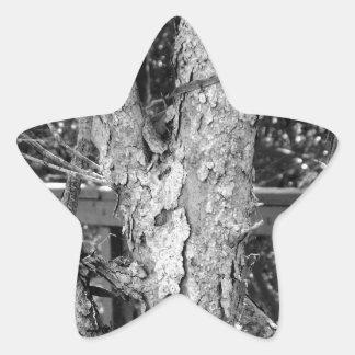 Black and White Tree Nature Photo Star Sticker