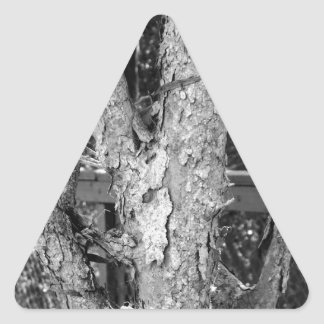 Black and White Tree Nature Photo Triangle Sticker