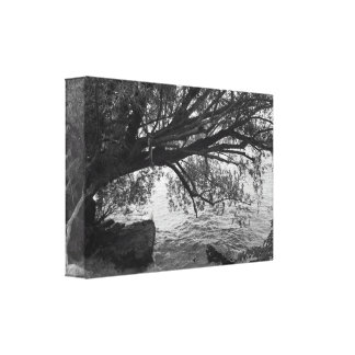 Black and White Tree Silhouette Stretched Canvas Print