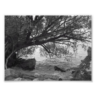 Black and White Tree Silhouette Photograph