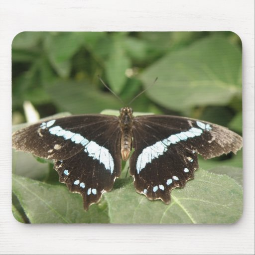 Black and White Tropical Butterfly Mousepad