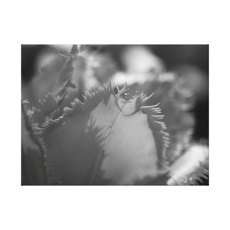 Black and White Tulip Close Up Canvas Print