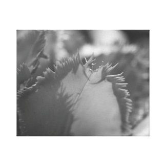 Black and White Tulip Stretched Canvas Prints