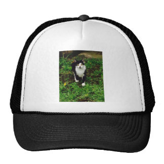 Black and white tuxedo cat in the green grass cap