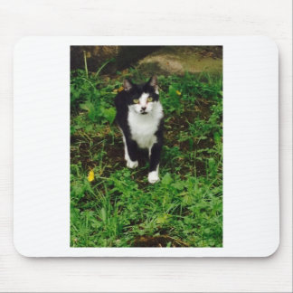 Black and white tuxedo cat in the green grass mouse pad