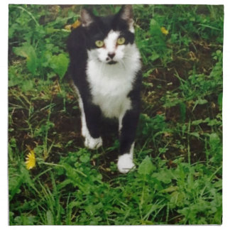 Black and white tuxedo cat in the green grass napkin