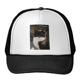 Black and White Tuxedo Kitty Cap
