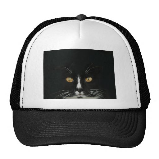 Black and White Tuxedo Kitty With Golden Eyes Hat