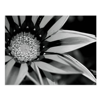 Black and White Wildflower Postcard
