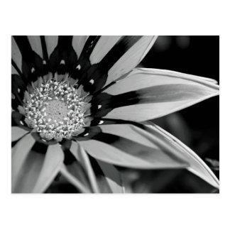 Black and White Wildflower Postcard