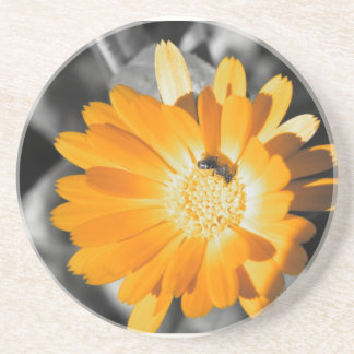 Black and White With Yellow Daisy Drink Coasters