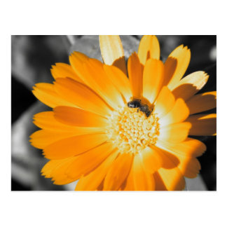Black and White With Yellow Daisy Postcard