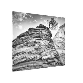 Black and White Zion Bonsai Tree Landscape Photo Canvas Print