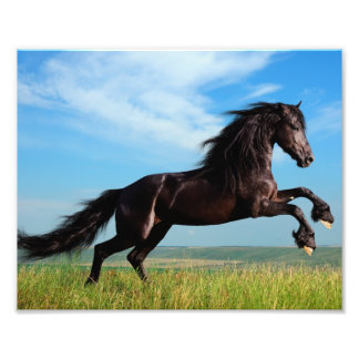 black and wild Stallion Rearing Horse Photo