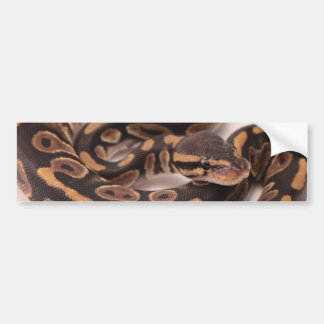 Black and Yellow Ball Python Bumper Sticker
